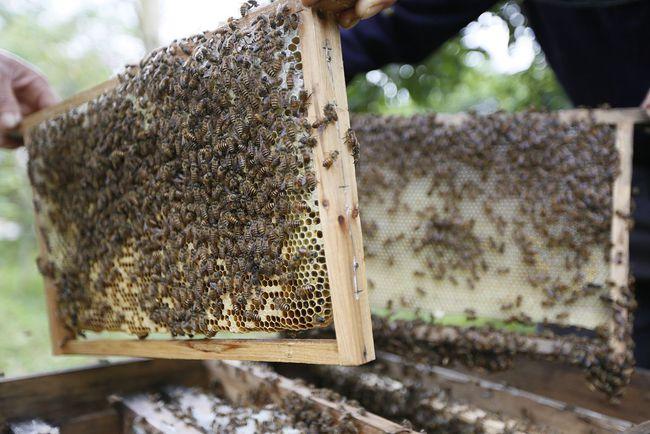 购买蜜蜂巢础技巧(巢础多少钱一张)