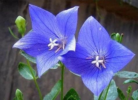 中草药蜜源植物有哪些(常见的蜜源植物有哪些)
