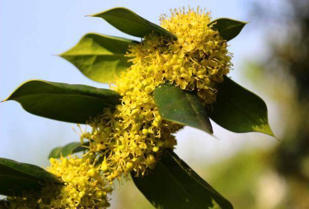 各个季节的蜜源植物(一年四季蜜源植物)