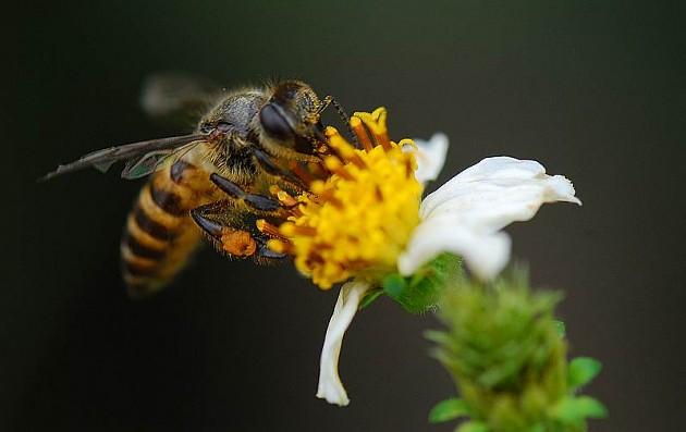 夏季养蜂怎么遮阴(夏季养蜂应该要注意什么)