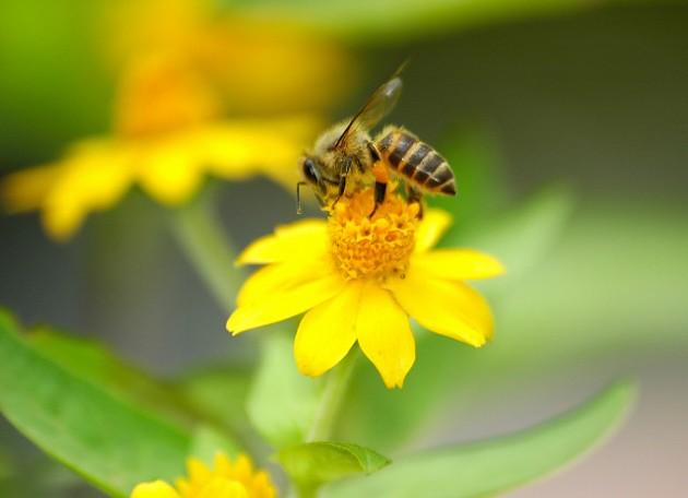 城市可以养蜂吗(城市养蜂违法吗)