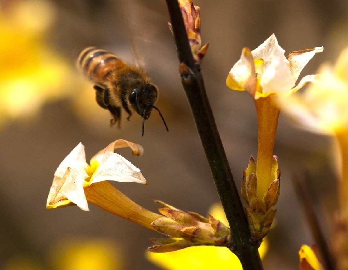 工蜂照顾蜂王和幼蜂是什么关系(蜂王与工蜂是什么关系)