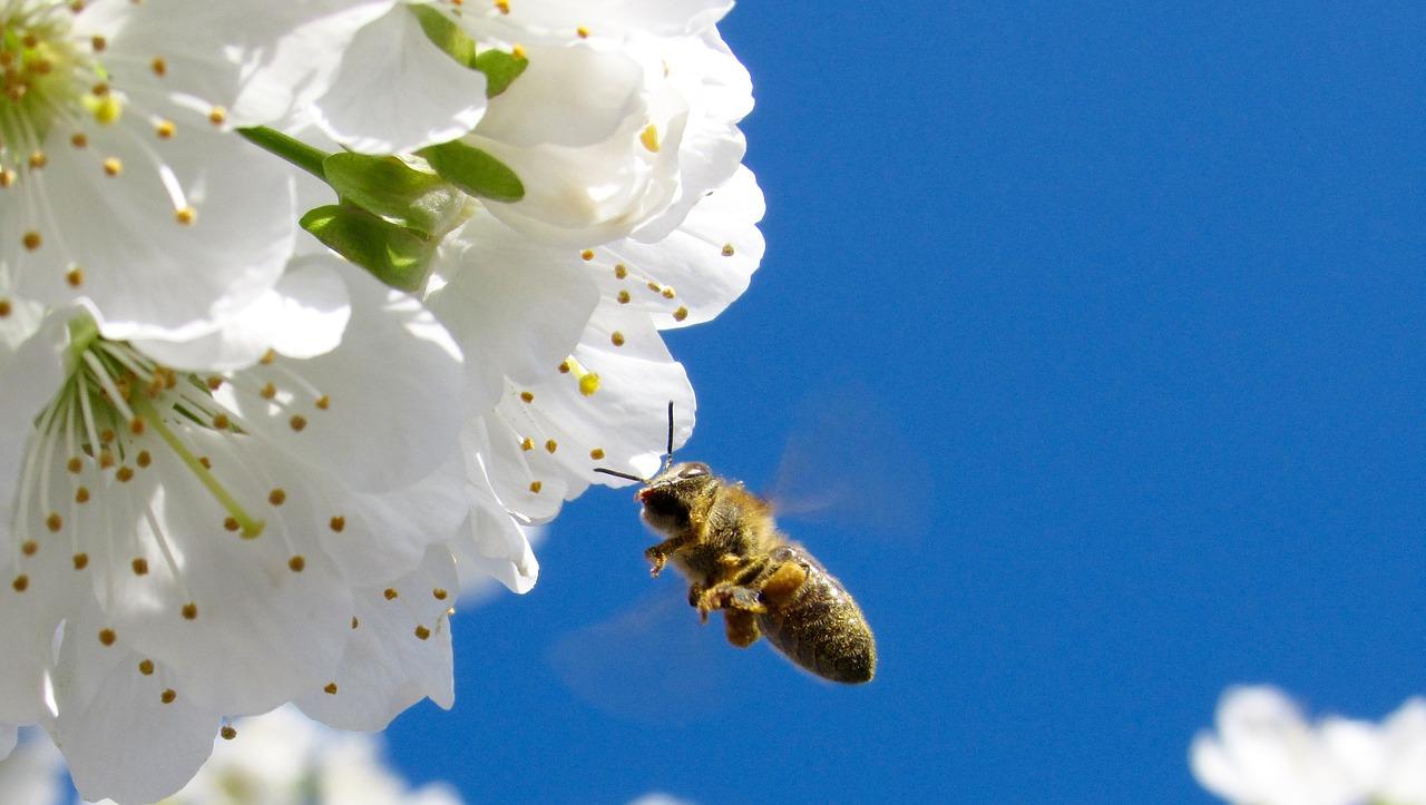 工蜂信息素有多少种(什么工蜂信息素)