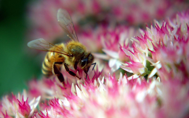 一只蜂王要多少只工蜂能养活(几只工蜂能养活一只蜂王)