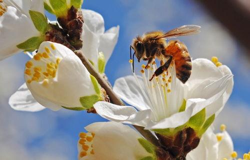 100只工蜂能养活蜂王吗(蜂王没有工蜂喂能活多久)