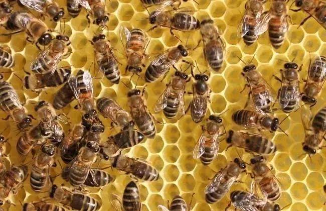 购买蜂群该在几月份(什么时候买蜂群最合适)