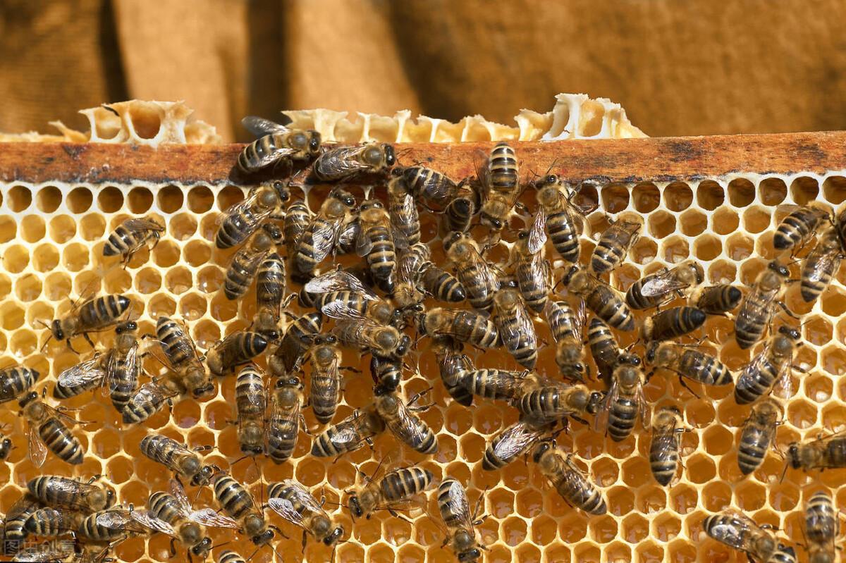 人工蜜蜂巢础的制作方法(自制简易巢础)