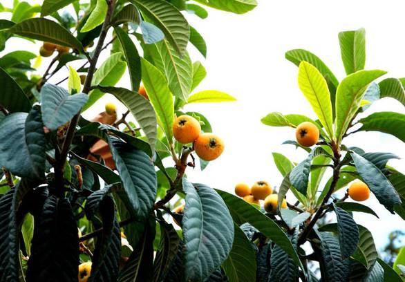 海南蜜源植物的开花时间(南方蜜源植物花期报)