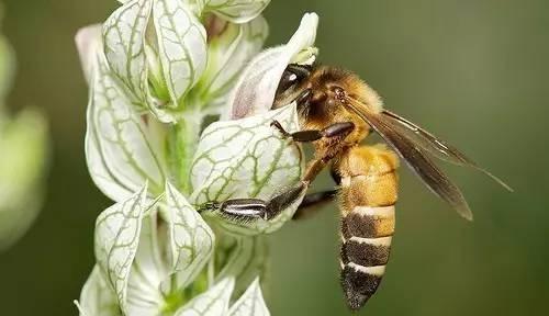 中蜂工蜂几天出房(中蜂工蜂出房几天试飞)