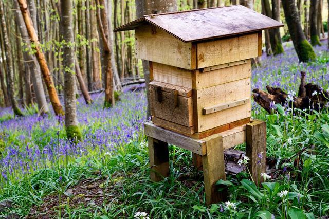 如何箱外观察蜜蜂(箱外观察蜜蜂会跑吗)