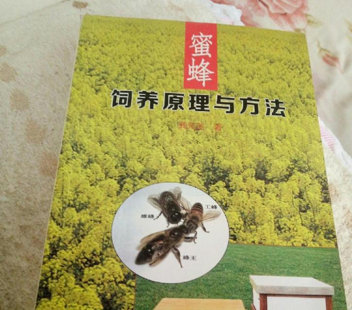 中蜂养殖场地的选择(养蜂需要什么样的场地)