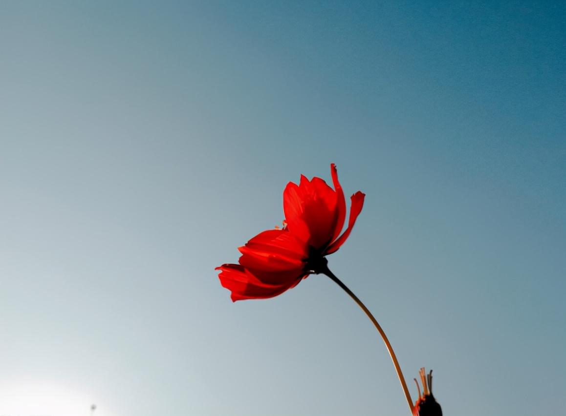 越是无人懂你,越要爱自己(没有人会永远爱你,除了你自己)