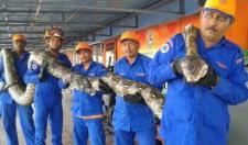 10米巨蟒真的存在?世界上最大的蟒蛇多长?温度上升出现新品种