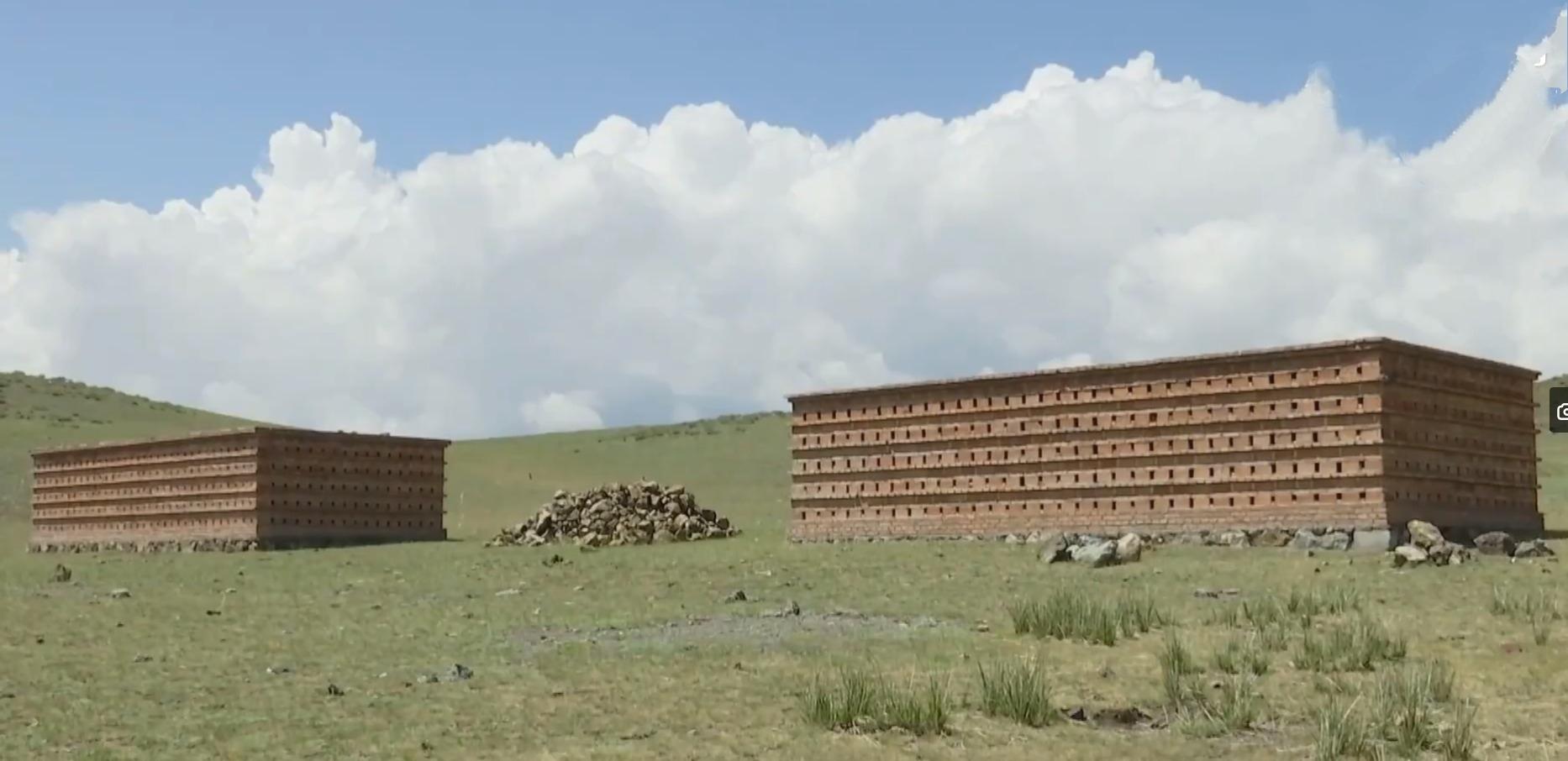 20万只粉红椋鸟驰援新疆灭蝗,护40万亩草场!蝗灾到底有多可怕?