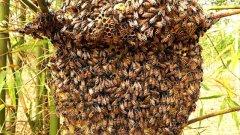 蜜蜂为什么不怕热(蜜蜂怕冷还是怕热)