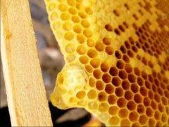 工蜂产的王台有用吗(工蜂产卵也会有王台吗)