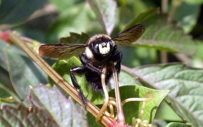 竹蜂一般在我国哪些地方有