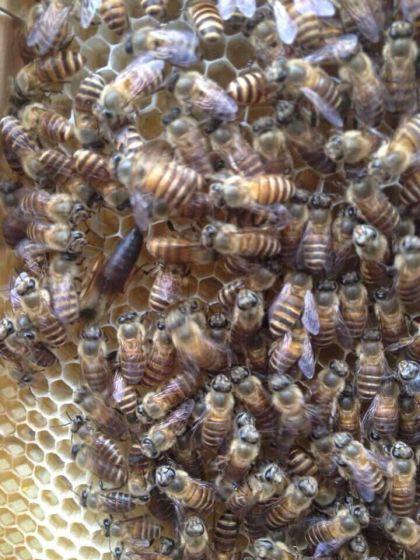 诱蜂水怎样使用