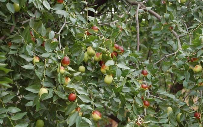 蜜源植物一览表