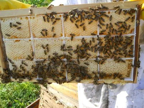东北黑蜂蜂箱几层