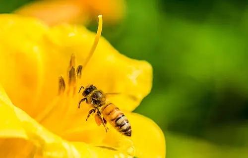 蜜蜂几月可以喂水(蜜蜂怎么喝水什么时候喂最好)