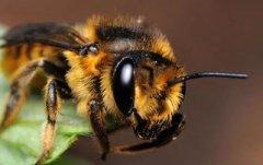 蜜蜂常见疾病防治方法(附带七种常见蜜蜂疾病)