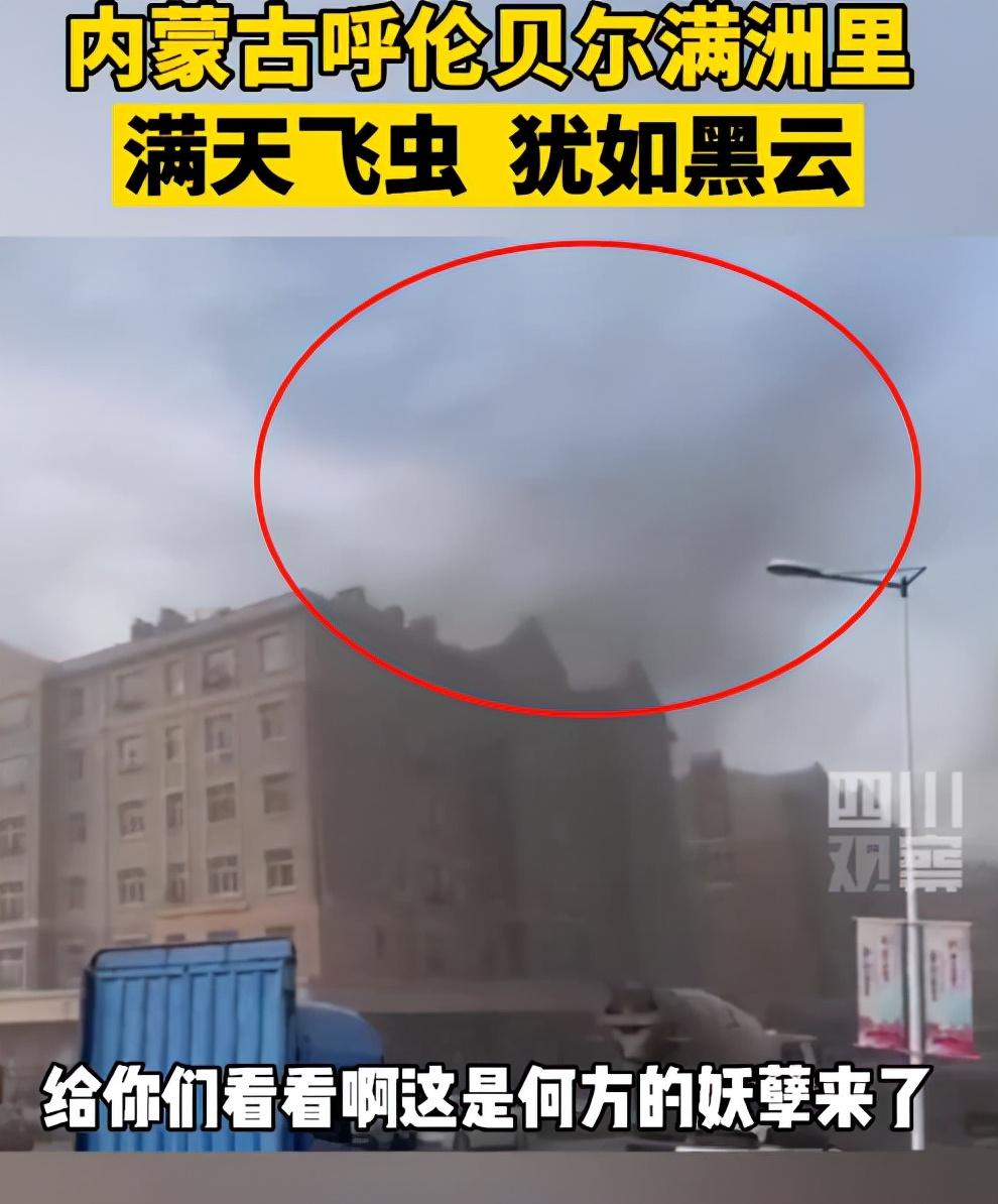 湖南沅江蜉蝣大爆发,内蒙古蚜虫大爆发,是气候大变的征兆吗?