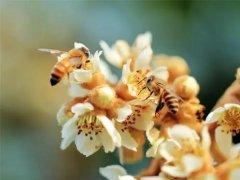 有关蜂的诗词(描写蜜蜂的诗句)