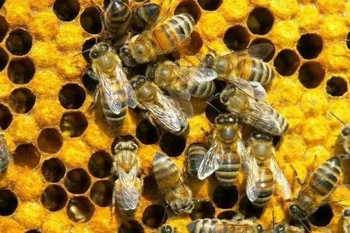有关蜂的诗词