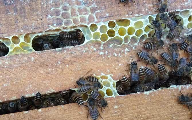 一群中蜂多少钱