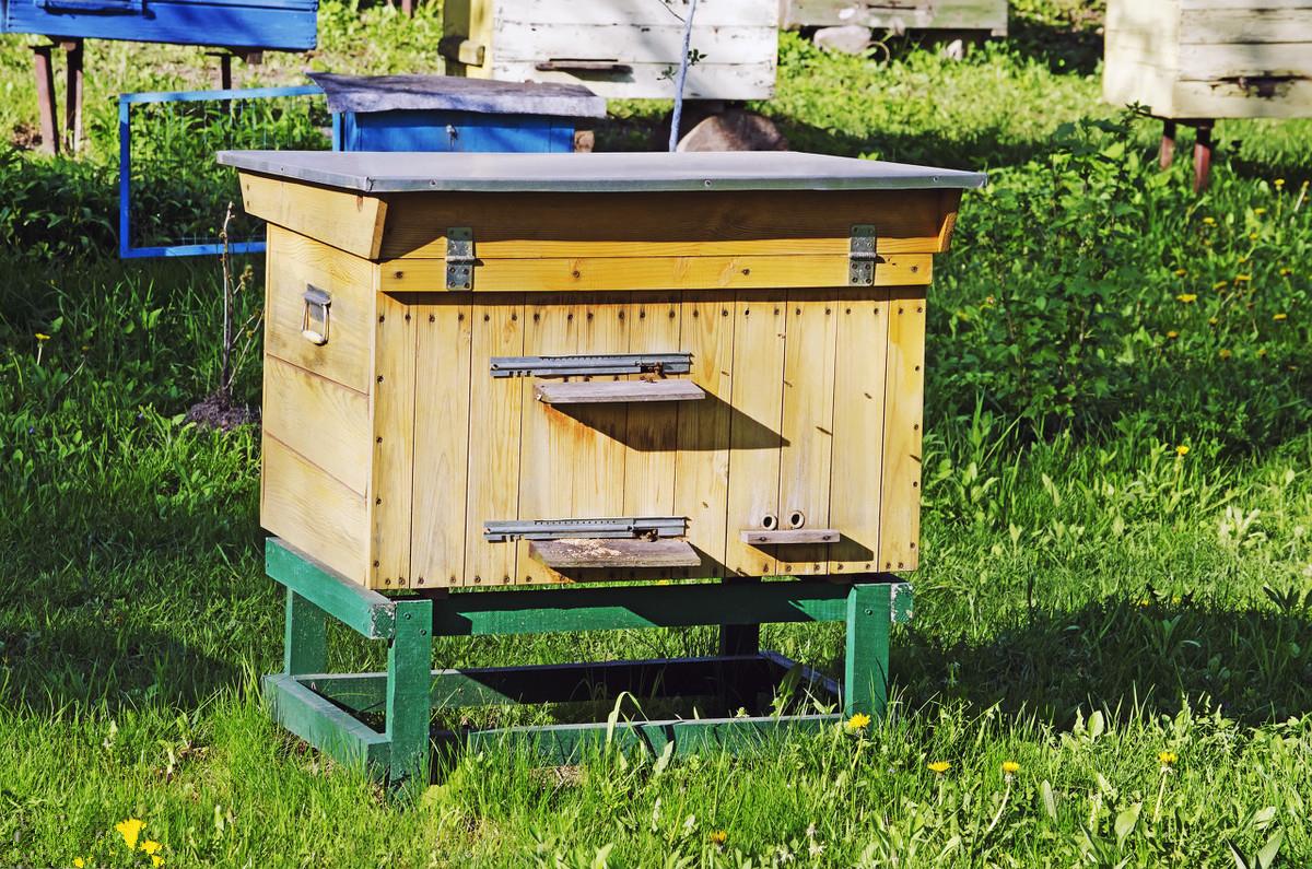 蜂王出壳多久会发生二次分蜂