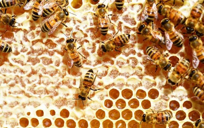 蜂蜜不能放在冰箱里面吗