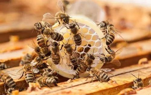 为什么家里有蜜蜂出现(家里无缘无故出现蜜蜂)
