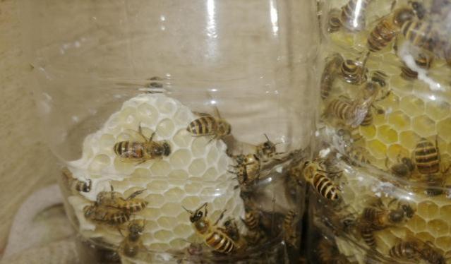 江西野蜂什么时候取蜜