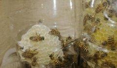 江西野蜂什么时候取蜜(野蜜蜂什么时候取蜂蜜最好)