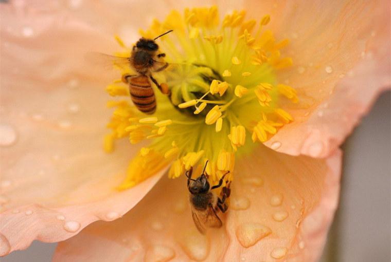 黑蜂爱吃什么(蜜蜂爱吃什么食物)