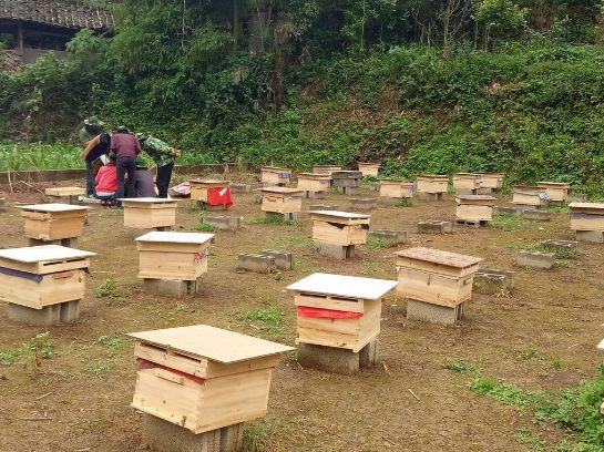 中蜂双王群养殖技术
