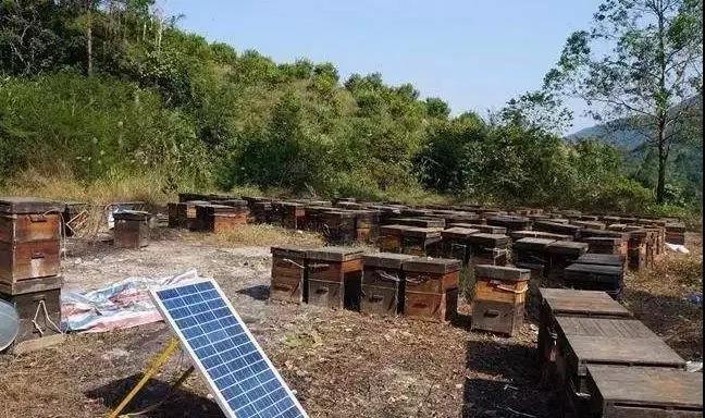 怎么养中华蜜蜂