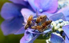 中华蜜蜂大概多少天会出一批子(蜜蜂多久出一批工蜂)