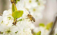 蜜蜂保温布(覆布)的使用方法