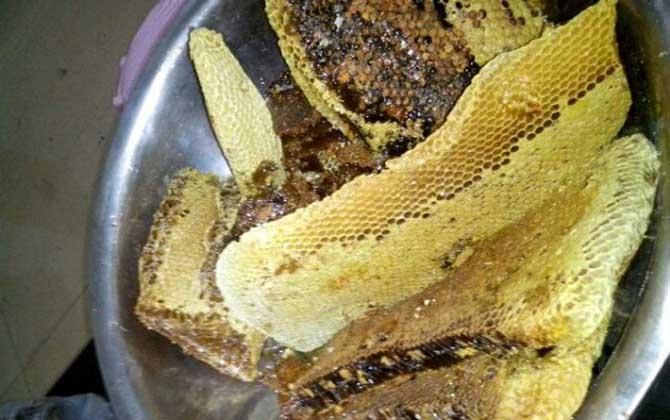 土养蜜蜂取蜜在什么时候好