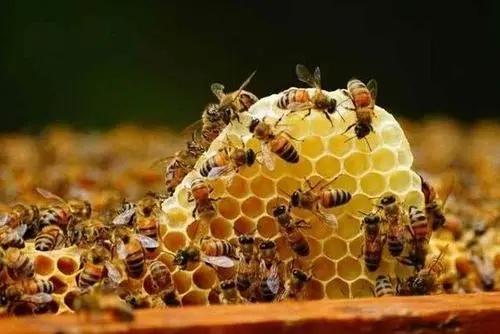 蜂王为什么能产那么多的卵(蜂王一年产卵几次)