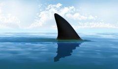 全球年销售鱼翅140万吨,杀死1亿条鲨鱼,为何不能人工饲养
