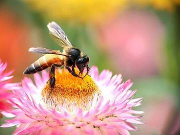 蜜蜂最怕什么药会死亡呢