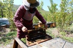 蜜蜂最怕什么药会死亡呢(蜜蜂为什么会死的那么多呢)