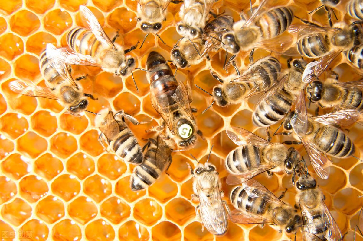 怎样才知道蜂玉交尾成功