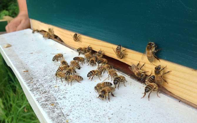 蜜蜂几月几号喂越冬糖