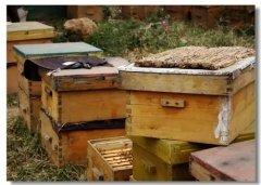 自己家楼上适合养蜂吗(家庭养蜂需要什么条件)