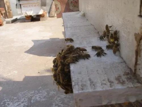 自己家楼上适合养蜂吗