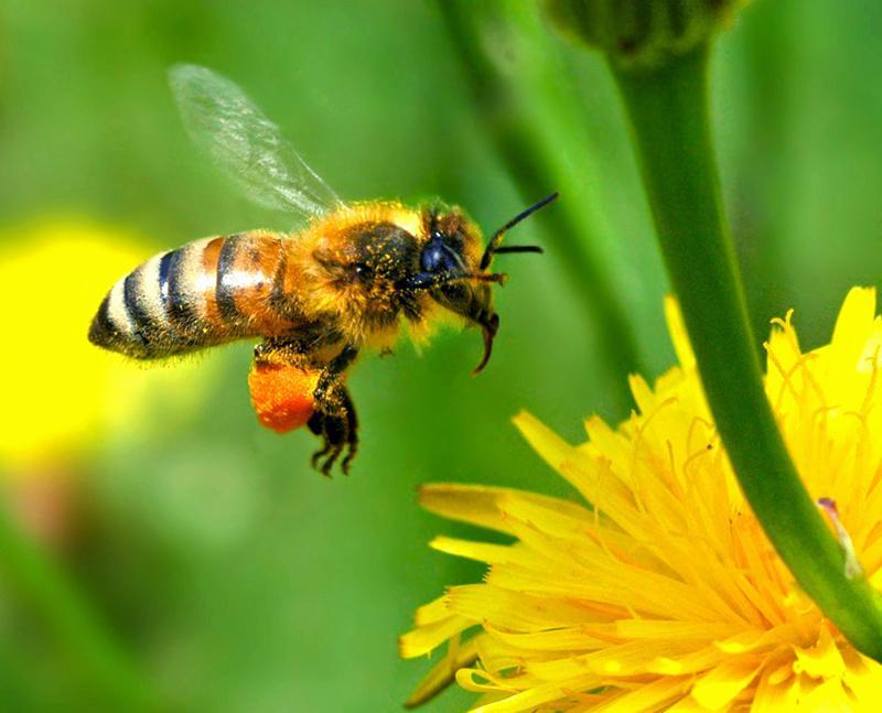 蜜蜂一年四季都在采蜜吗(蜜蜂四季都干什么)